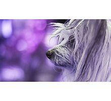 Dog Portrait - Dharma Photographic Print