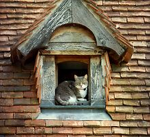 Cat  on the roof by Nimou