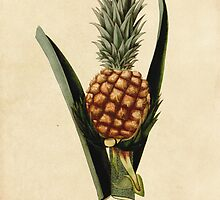 Vintage Pineapple Illustration by PatiDesigns
