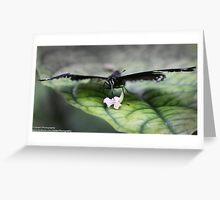 Nectar  Greeting Card