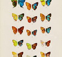 Butterfly Plate, Vintage Illustration by PatiDesigns