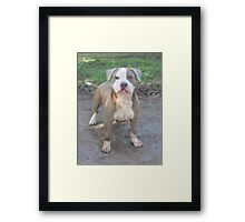 Muggsy Framed Print