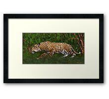 Jaguar Stalking Prey Framed Print
