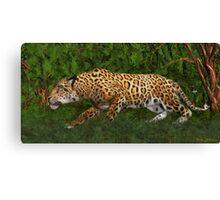 Jaguar Stalking Prey Canvas Print