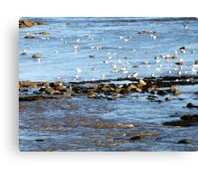 Getting Ready To Roost Canvas Print