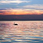 Great Blue Heron Silhouette  by Bill Wakeley