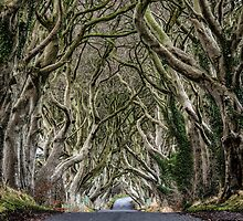 Dark Hedges by Nigel R Bell