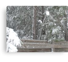 SNOW ON THE FENCE Canvas Print