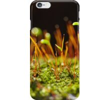 A group of very small beech trees iPhone Case/Skin