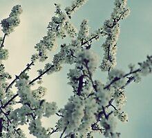Spring by SylvestreLeChat