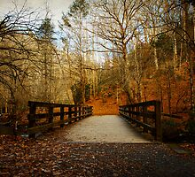 Walking into The Great Smoky Mountains by JKKimball