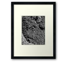 Tough Bull (BW) Framed Print