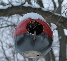 Round Red Bird House  by jjastren