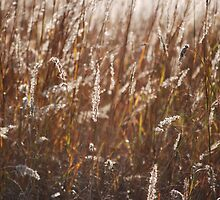 Sunlit Weeds by Mark McReynolds