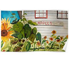 Sunflowers at Johnson Orchards Poster