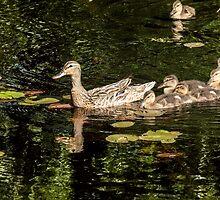 Ducklings family by LudaNayvelt