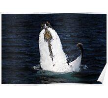 Humpback Whale Ballet Dancer Poster