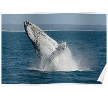 Humpback Whale Breaching 2 Poster