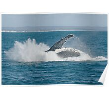 Humpback Whale Breach 4 Poster