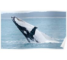 Humpback Whale Breaching single image Poster