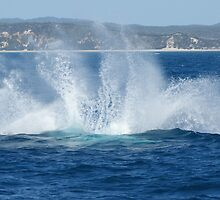 Humpback Whale Breach Might Splash by Gotcha29