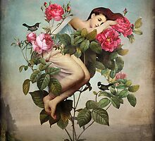 In Bloom by ChristianSchloe