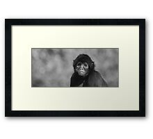 Sad Monkey Framed Print