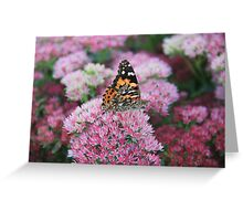 Pretty Wings Greeting Card