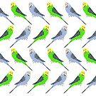 Budgies A Lot by Hello I'm Nik