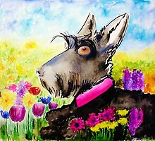 Scottie Dog 'In the wild flowers' by archyscottie