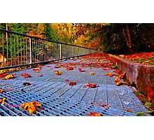 Leafy Grate Photographic Print
