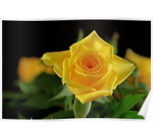 Yellow Texas Rose Poster