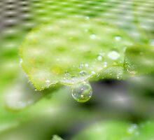 The raindrop by aprilann