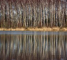 Silver Birch Reflections by Jo Nijenhuis