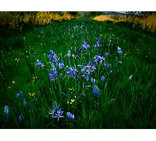 Love, Dream, Wish ~ Wild Camas ~ Photographic Print