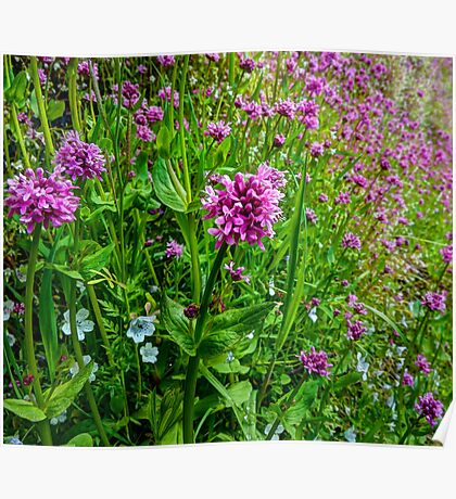A Touch Of The Wild  ~ Wild Flowers ~ Poster