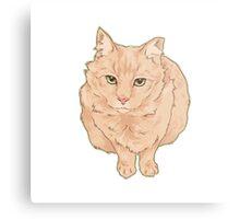 Most Beloved Feral Cat / Ginger Metal Print