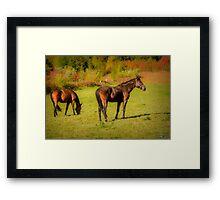 Horses in Mabou Framed Print
