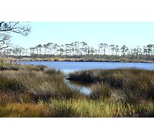 Picturesque Marshy Gulf~ Photographic Print