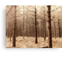 Forest 6 Canvas Print