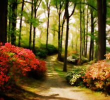 Dreamy Path by Lois  Bryan