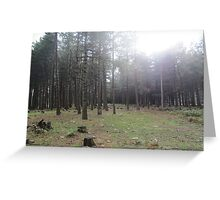 Forest 9 Greeting Card