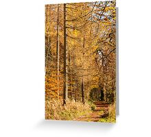Autumn colours, riverside walk, November 2103  Greeting Card