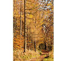 Autumn colours, riverside walk, November 2103  Photographic Print