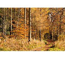 Autumn colors, riverside walk, November 2103  Photographic Print