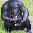 Chimpanzee and Baby by Sheila Smith