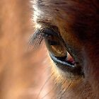 HORSE EYE 2 by Betsy  Seeton
