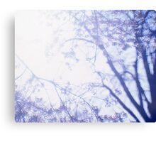 Flowering cherry tree - multiple exposure Canvas Print