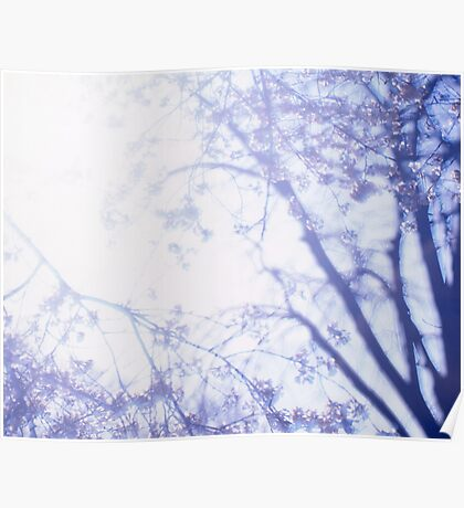 Flowering cherry tree - multiple exposure Poster