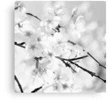 Cherry blossoms - monochrome Canvas Print
